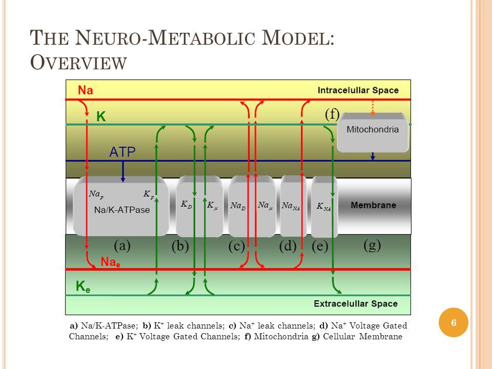 T HE N EURO -M ETABOLIC M ODEL : O VERVIEW a) Na/K-ATPase; b) K + leak channels; c) Na + leak channels; d) Na + Voltage Gated Channels; e) K + Voltage Gated Channels; f) Mitochondria g) Cellular Membrane 6