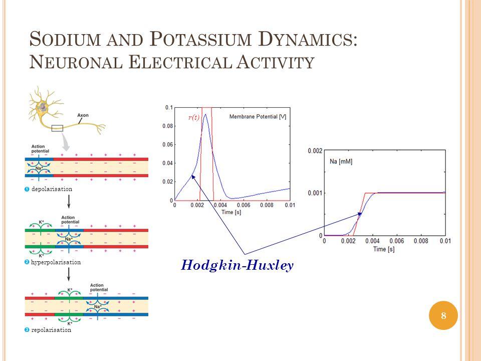 S ODIUM AND P OTASSIUM D YNAMICS : N EURONAL E LECTRICAL A CTIVITY Hodgkin-Huxley r(t) depolarisation hyperpolarisation repolarisation 8