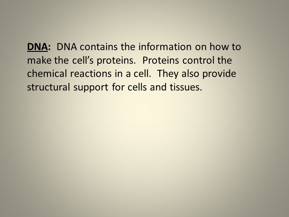 DNA: DNA contains the information on how to make the cell's proteins.