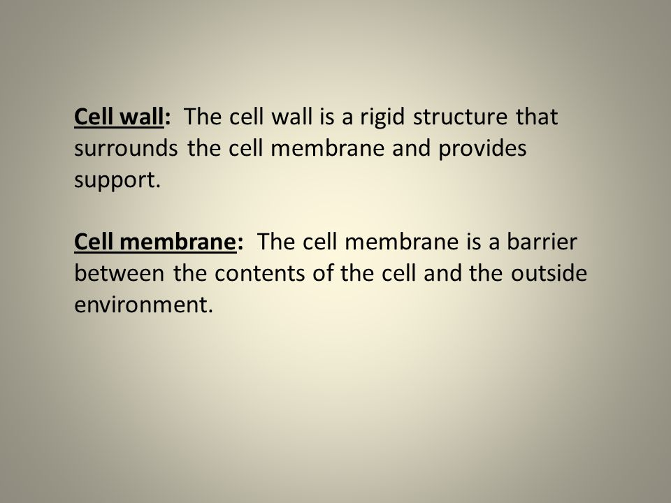 Cell wall: The cell wall is a rigid structure that surrounds the cell membrane and provides support.