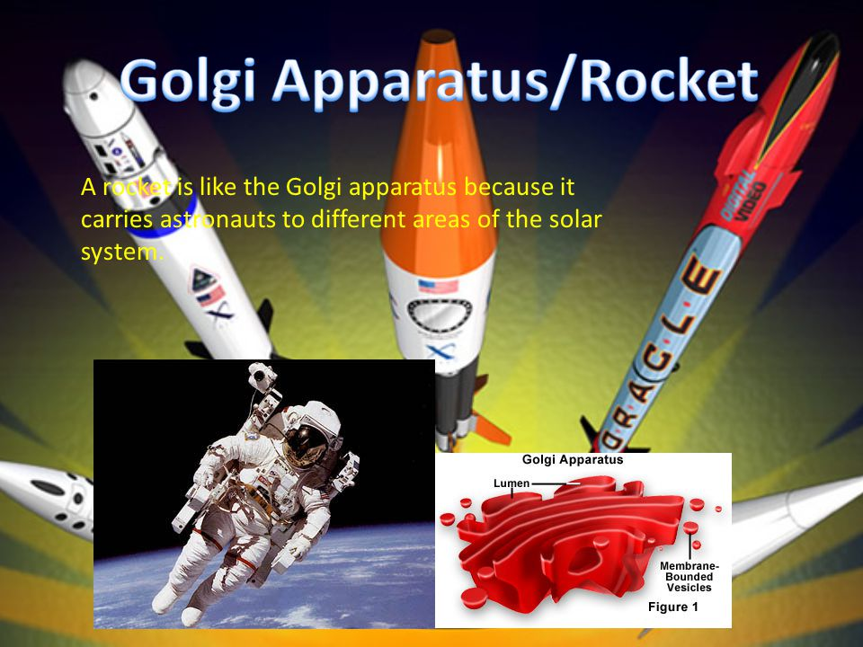 A rocket is like the Golgi apparatus because it carries astronauts to different areas of the solar system.