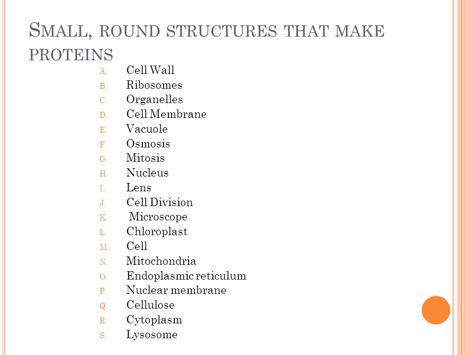S MALL, ROUND STRUCTURES THAT MAKE PROTEINS A. Cell Wall B.