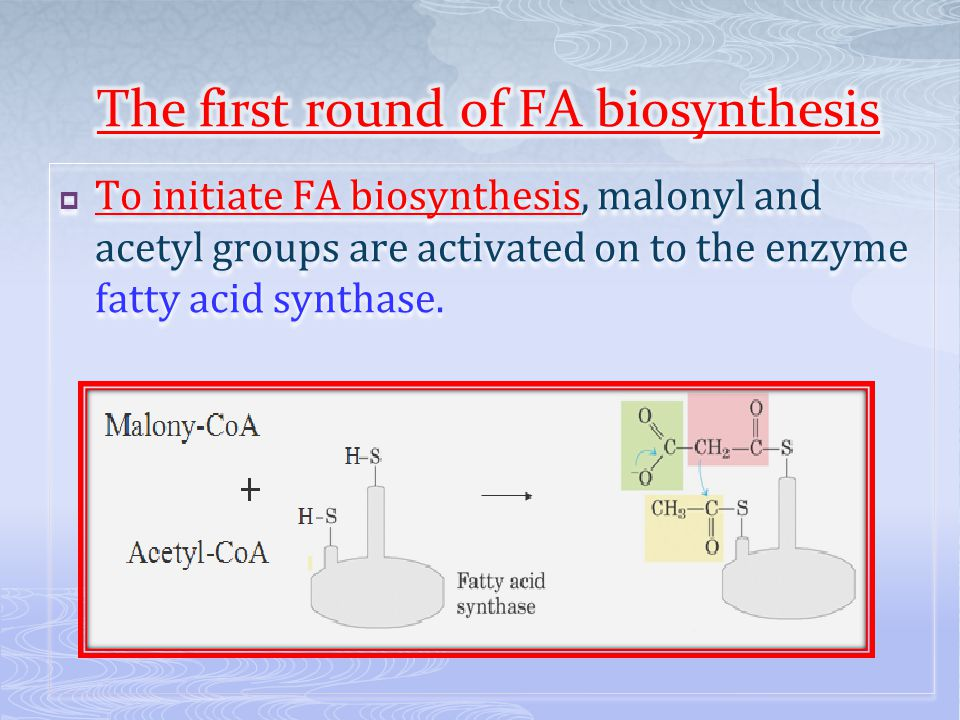  To initiate FA biosynthesis, malonyl and acetyl groups are activated on to the enzyme fatty acid synthase.