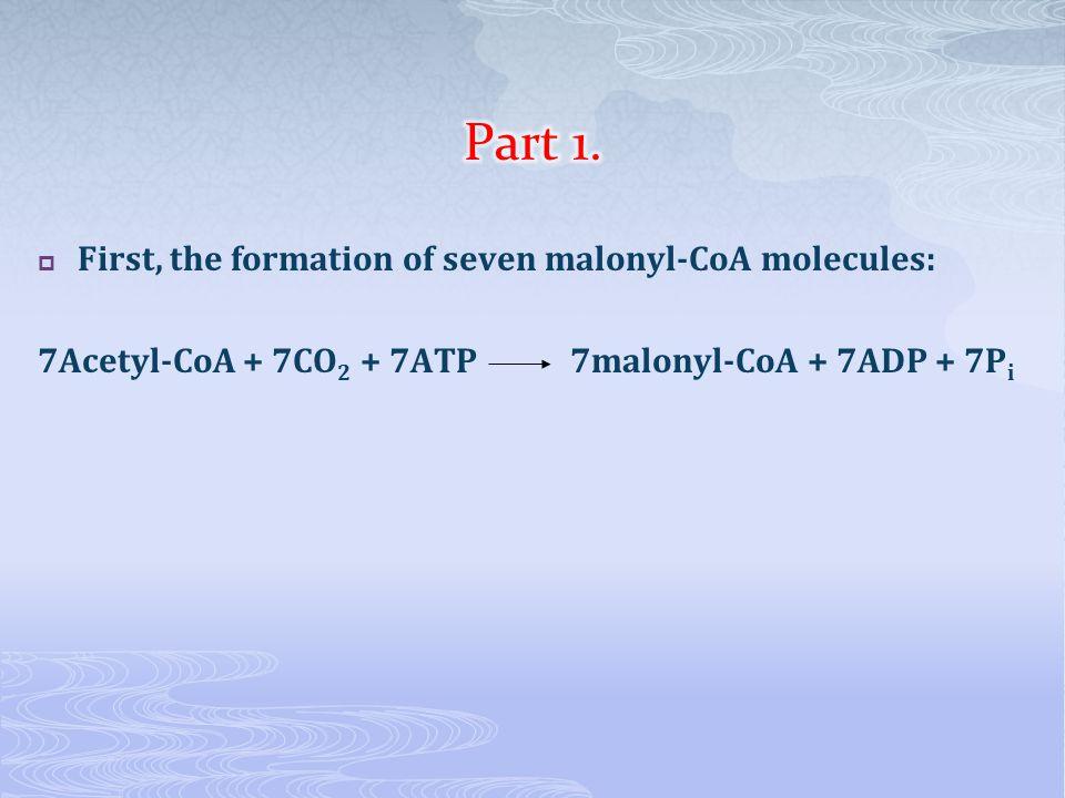  First, the formation of seven malonyl-CoA molecules: 7Acetyl-CoA + 7CO 2 + 7ATP 7malonyl-CoA + 7ADP + 7P i