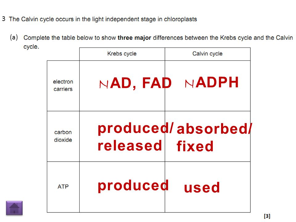 N AD, FAD N ADPH produced/ released absorbed/ fixed produced used (a) 3