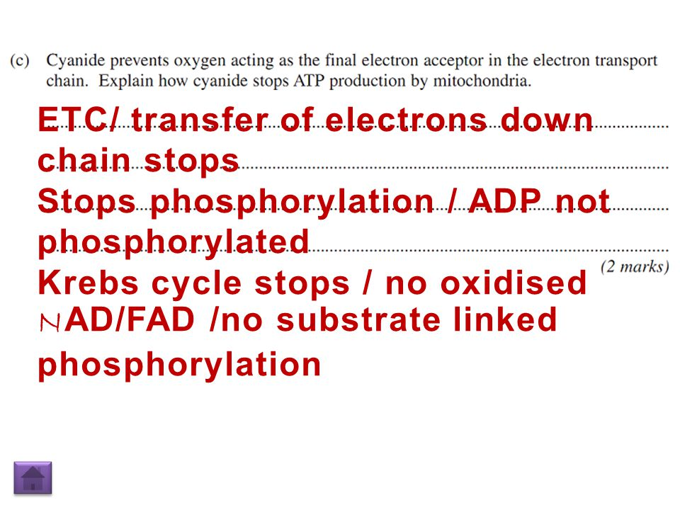 ETC/ transfer of electrons down chain stops Stops phosphorylation / ADP not phosphorylated Krebs cycle stops / no oxidised N AD/FAD /no substrate linked phosphorylation