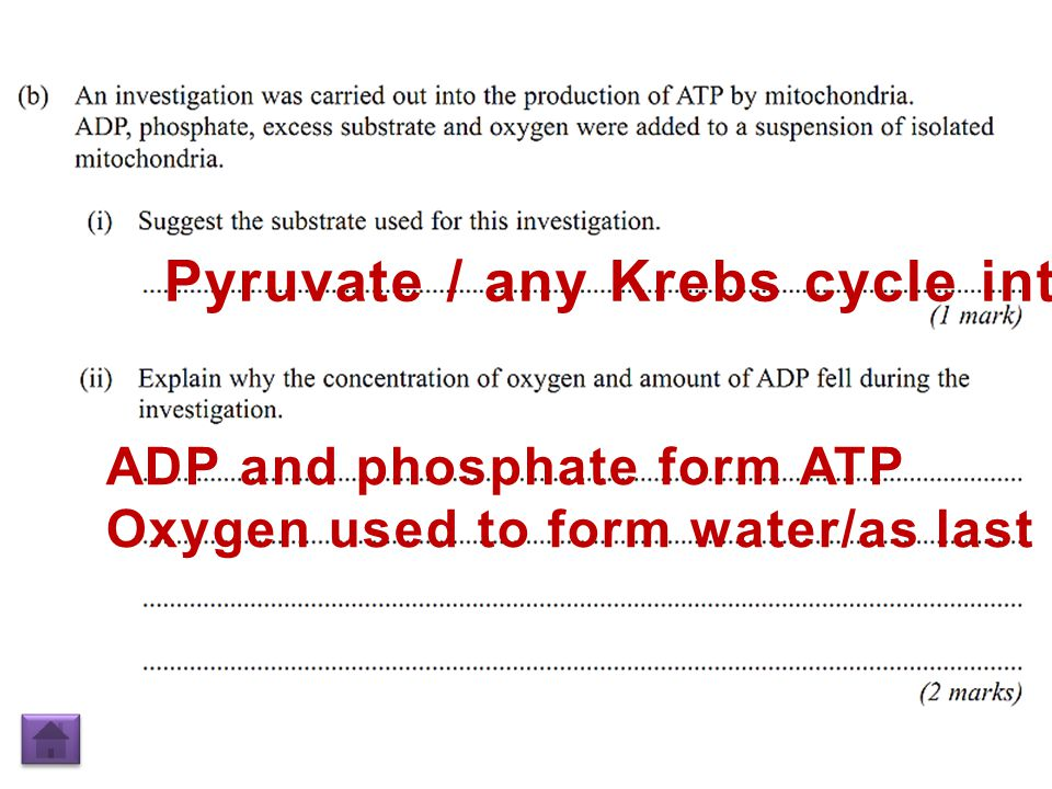 Pyruvate / any Krebs cycle intermediate ADP and phosphate form ATP Oxygen used to form water/as last electron acceptor