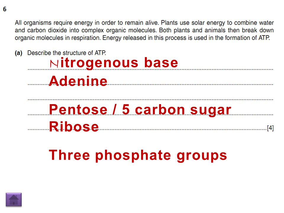 N itrogenous base Adenine Pentose / 5 carbon sugar Ribose Three phosphate groups