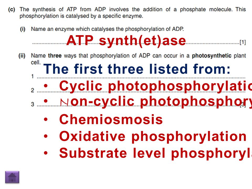 ATP synth(et)ase The first three listed from: Cyclic photophosphorylation N on-cyclic photophosphorylation Chemiosmosis Oxidative phosphorylation Substrate level phosphorylation