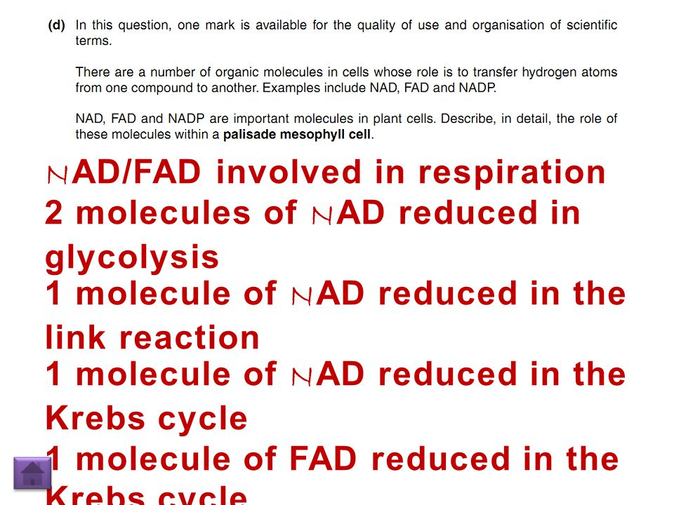 N AD/FAD involved in respiration 2 molecules of N AD reduced in glycolysis 1 molecule of N AD reduced in the link reaction 1 molecule of N AD reduced in the Krebs cycle 1 molecule of FAD reduced in the Krebs cycle Transfer hydrogen to inner mitochondrial membrane / cristae