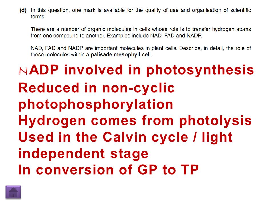 N ADP involved in photosynthesis Reduced in non-cyclic photophosphorylation Hydrogen comes from photolysis Used in the Calvin cycle / light independent stage In conversion of GP to TP