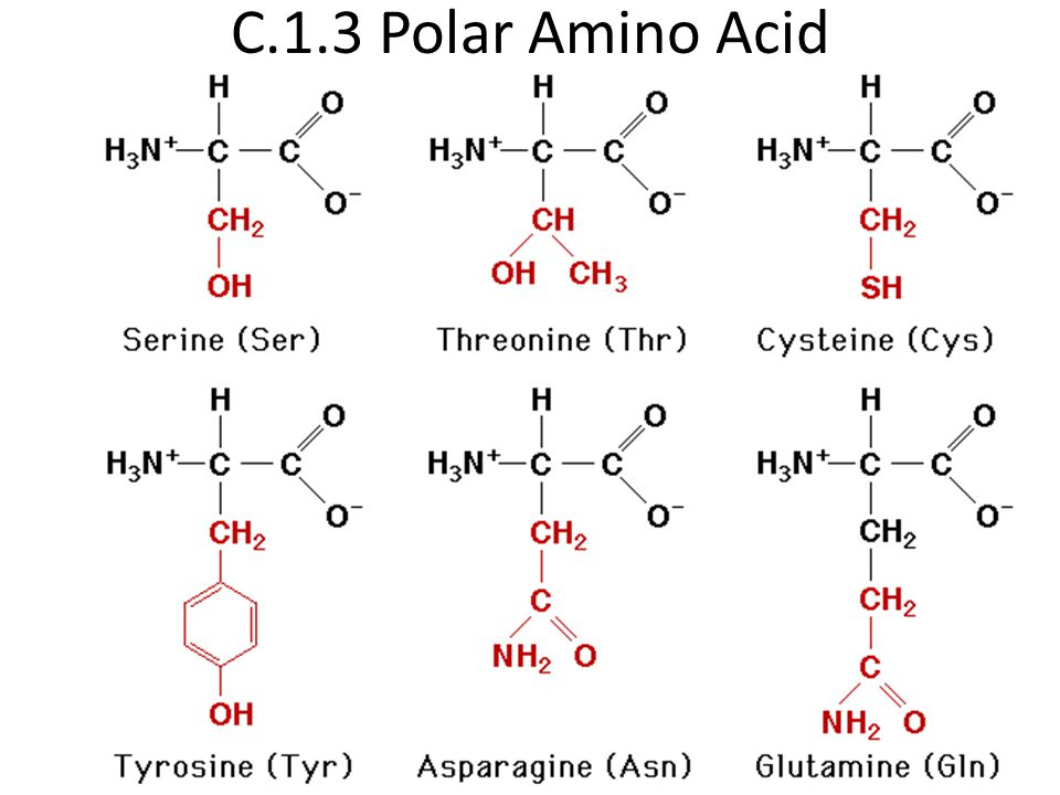 C.1.3 Polar Amino Acid