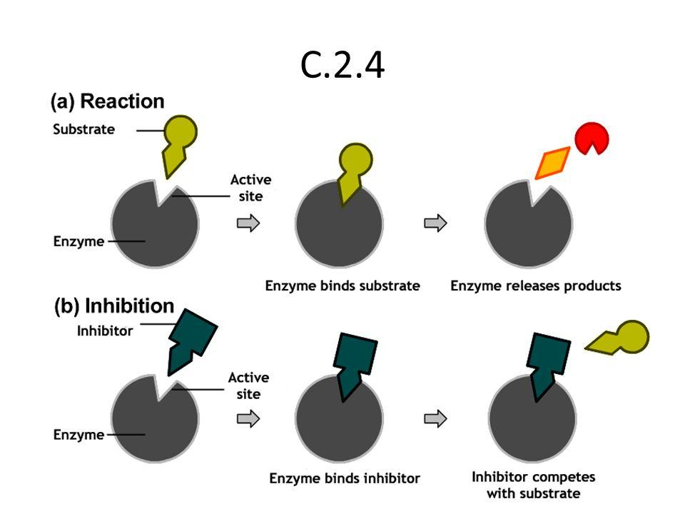 C.2.4