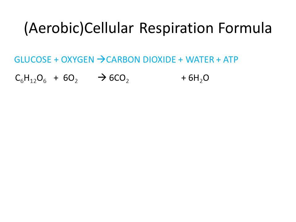 (Aerobic)Cellular Respiration Formula GLUCOSE + OXYGEN  CARBON DIOXIDE + WATER + ATP C 6 H 12 O 6 + 6O 2  6CO 2 + 6H 2 O