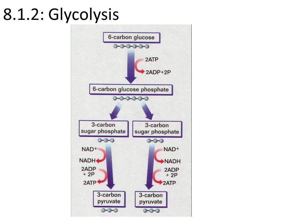 8.1.2: Glycolysis