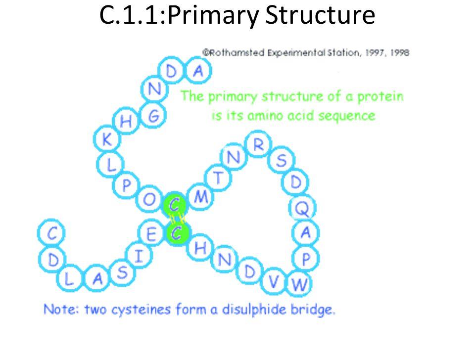 C.1.1:Primary Structure