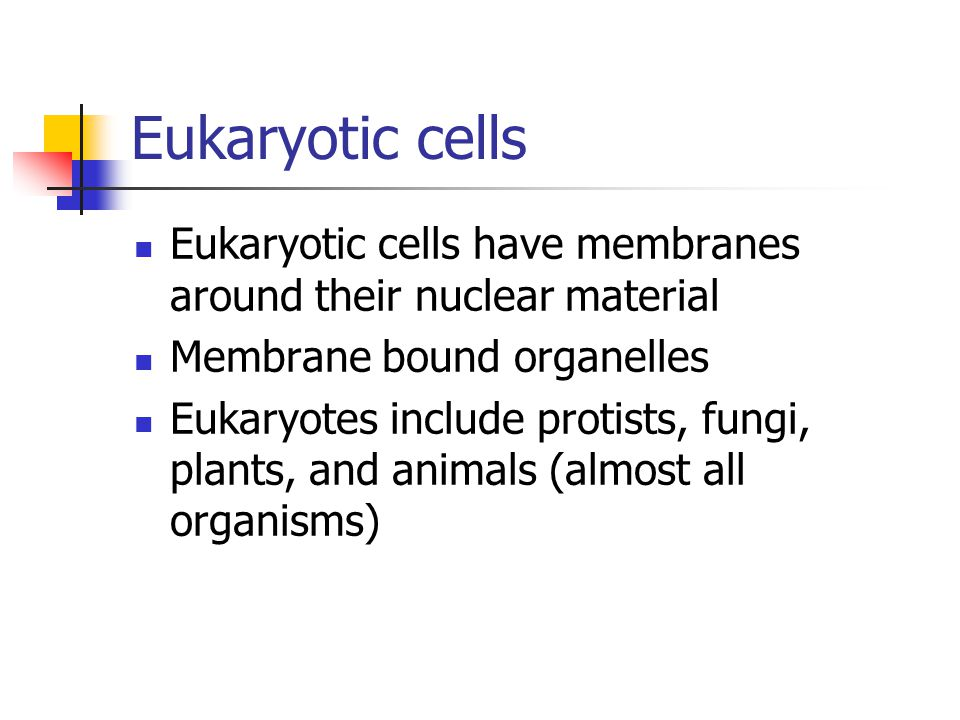 Eukaryotic cells Eukaryotic cells have membranes around their nuclear material Membrane bound organelles Eukaryotes include protists, fungi, plants, a