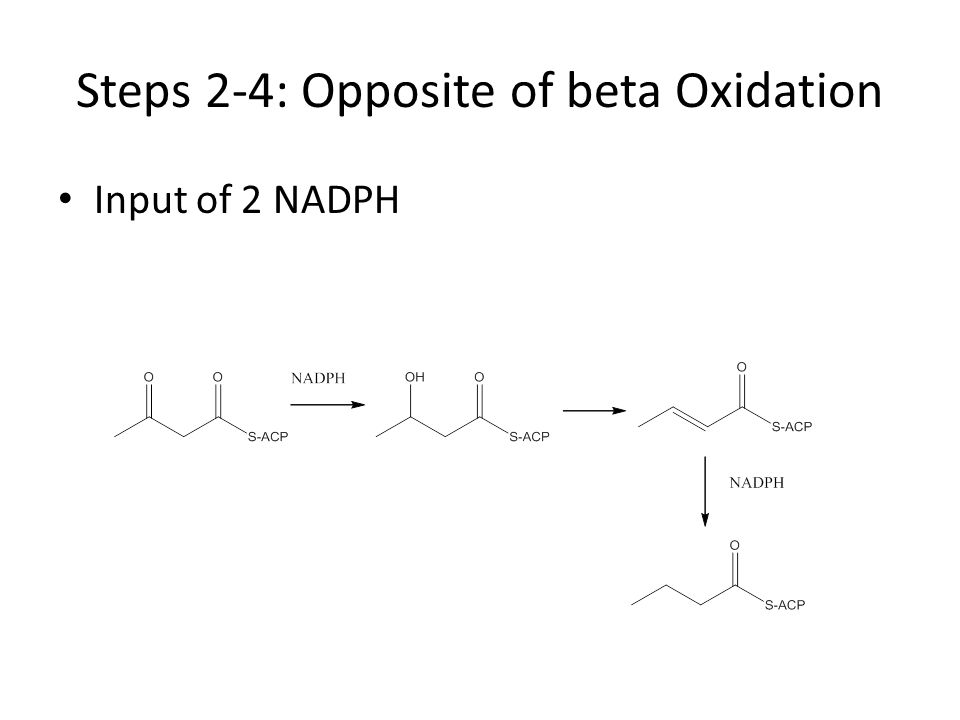 Steps 2-4: Opposite of beta Oxidation Input of 2 NADPH