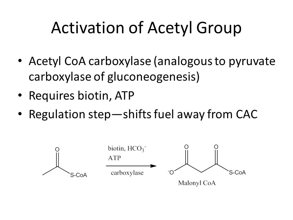 Activation of Acetyl Group Acetyl CoA carboxylase (analogous to pyruvate carboxylase of gluconeogenesis) Requires biotin, ATP Regulation step—shifts fuel away from CAC