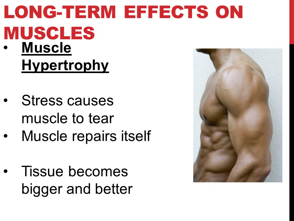LONG-TERM EFFECTS ON MUSCLES Muscle Hypertrophy Stress causes muscle to tear Muscle repairs itself Tissue becomes bigger and better