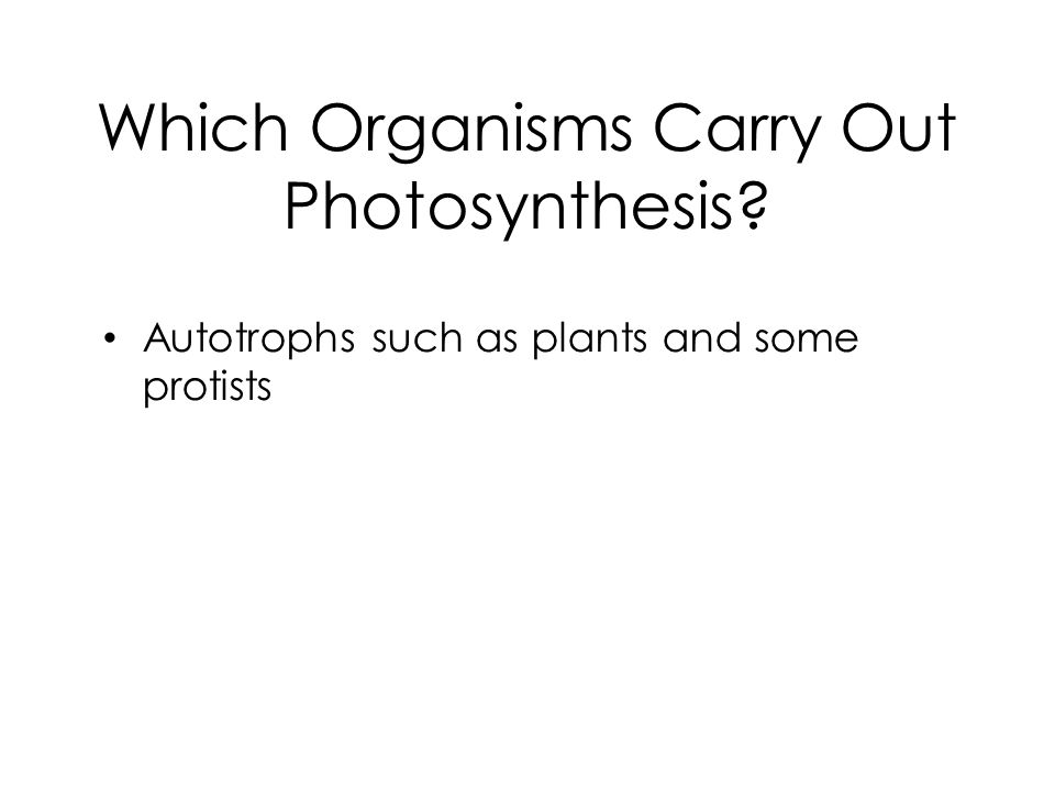 Which Organisms Carry Out Photosynthesis? Autotrophs such as plants and some protists