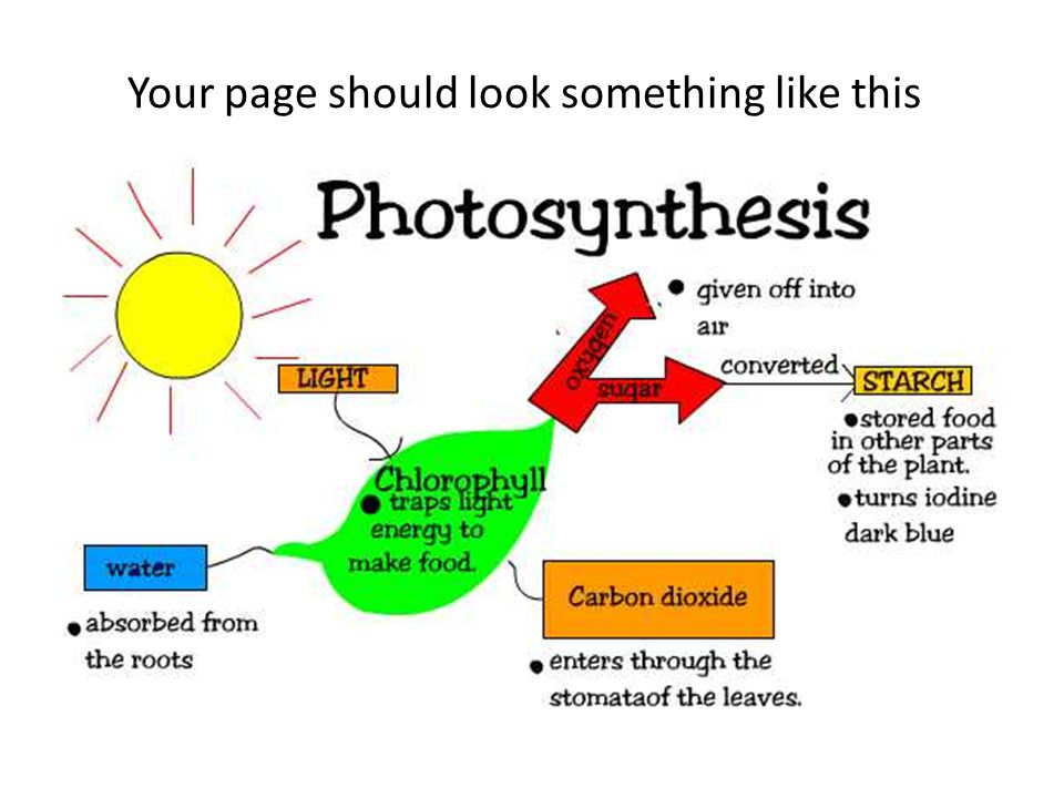 Summarize photosynthesis Class discussion