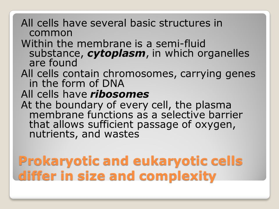 Lysosomes Lysosomes are digestive compartments A lysosome is a membrane-bounded sac of enzymes that the cell uses to digest macromolecules There are lysosomal enzymes that can hydrolyze proteins, polysaccharides, fats, and nucleic acids