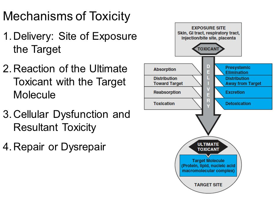 Mechanisms of Toxicity 1.Delivery: Site of Exposure to the Target 2.Reaction of the Ultimate Toxicant with the Target Molecule 3.Cellular Dysfunction