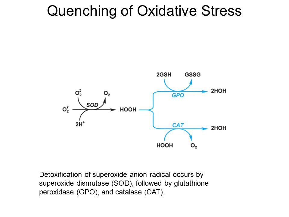 Quenching of Oxidative Stress Detoxification of superoxide anion radical occurs by superoxide dismutase (SOD), followed by glutathione peroxidase (GPO
