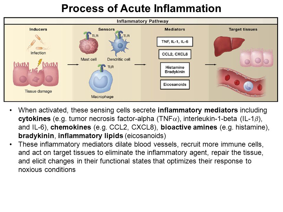 Process of Acute Inflammation When activated, these sensing cells secrete inflammatory mediators including cytokines (e.g. tumor necrosis factor-alpha