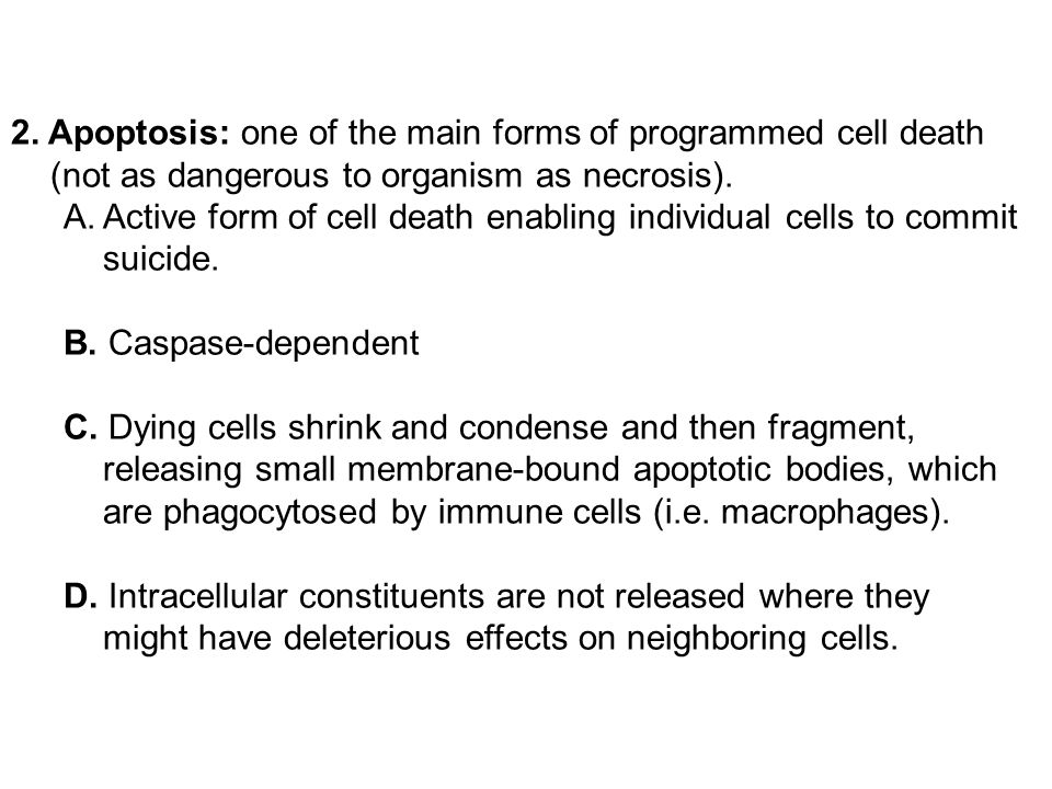 2. Apoptosis: one of the main forms of programmed cell death (not as dangerous to organism as necrosis). A.Active form of cell death enabling individu