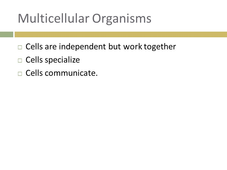 Levels of Organization  Tissue  Group of similar cells that performs a particular function.