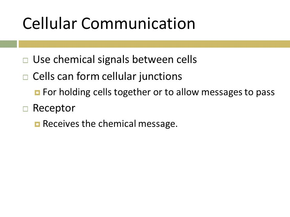 Cellular Communication  Use chemical signals between cells  Cells can form cellular junctions  For holding cells together or to allow messages to p