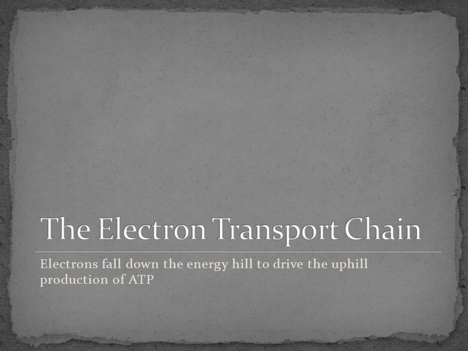 Electrons fall down the energy hill to drive the uphill production of ATP