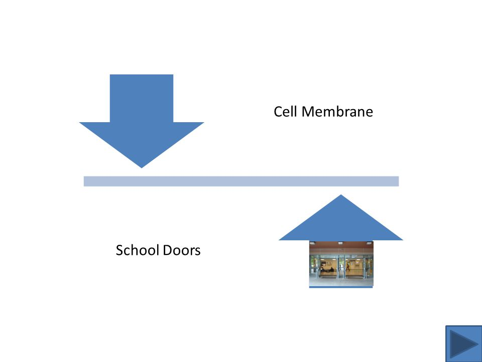 Cell Membrane Analogy The function of the cell membrane is to be a barrier for the cell.