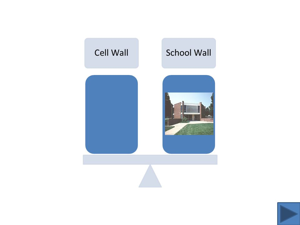 Cell Wall Analogy The function of the cell wall is to provide structural support to the cell and prevent over-expansion.