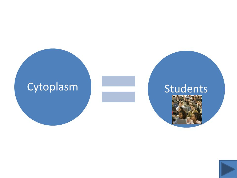 Cytoplasm Analogy Cytoplasm maintains the consistency and shape of a cell and are necessary to have a cell function.