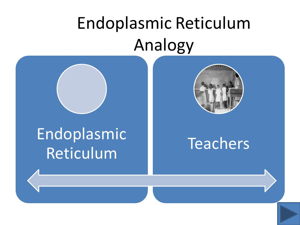 Endoplasmic Reticulum Teachers Endoplasmic Reticulum Analogy