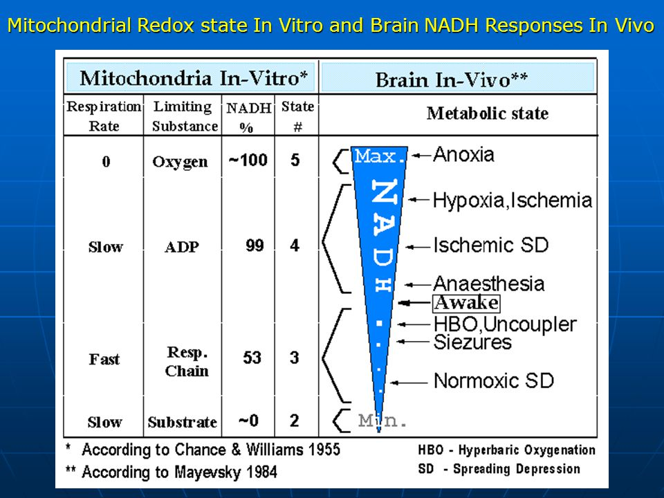 Mitochondrial Redox state In Vitro and Brain NADH Responses In Vivo