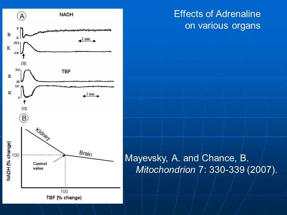 Mayevsky, A. and Chance, B. Mitochondrion 7: 330-339 (2007). Effects of Adrenaline on various organs