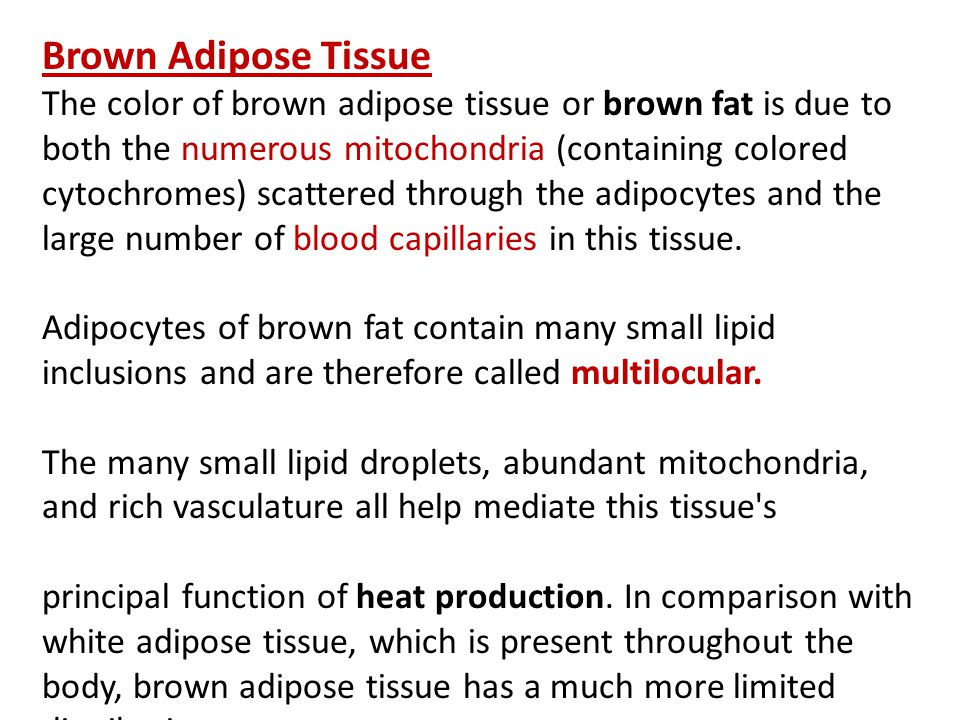Chapter 6 Adipose Tissue - ppt download