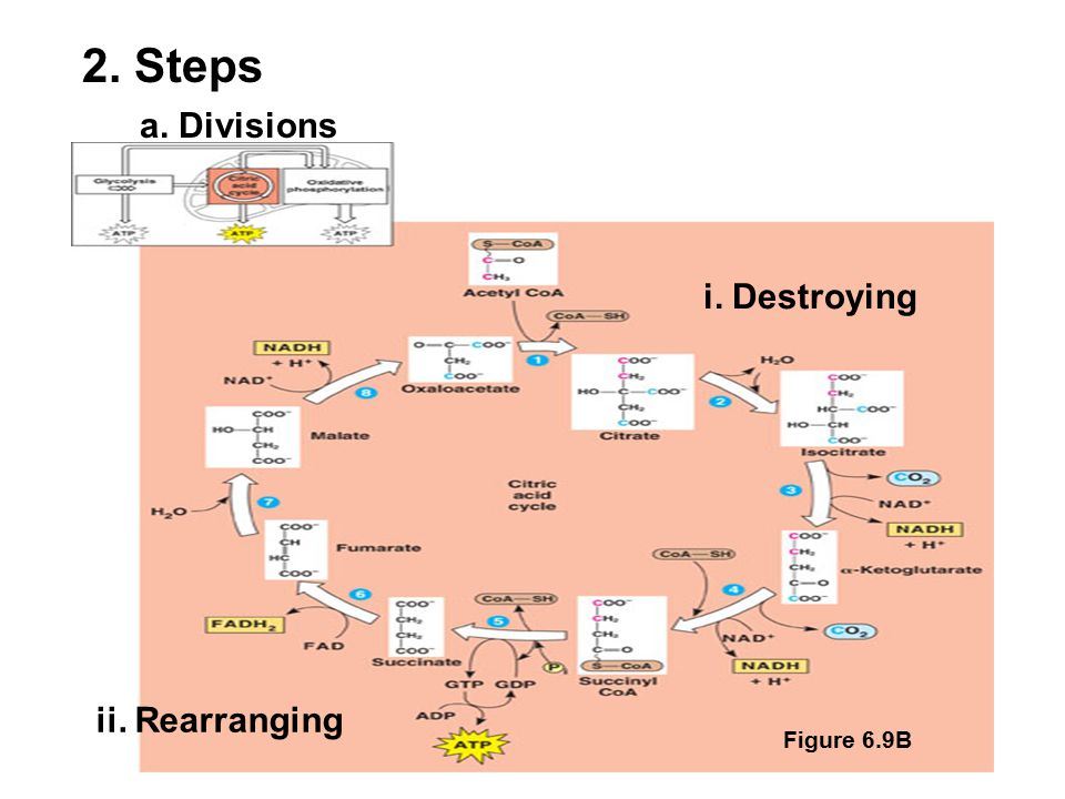 a. Divisions Figure 6.9B 2. Steps i. Destroying ii. Rearranging