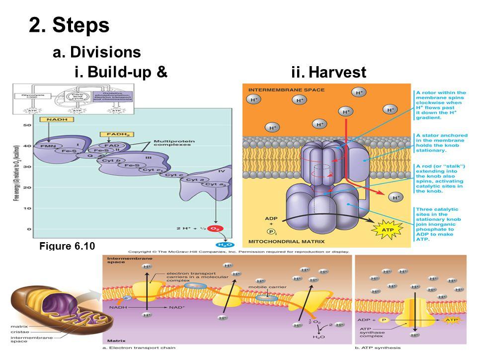 a. Divisions 2. Steps i. Build-up & Figure 6.10 ii. Harvest