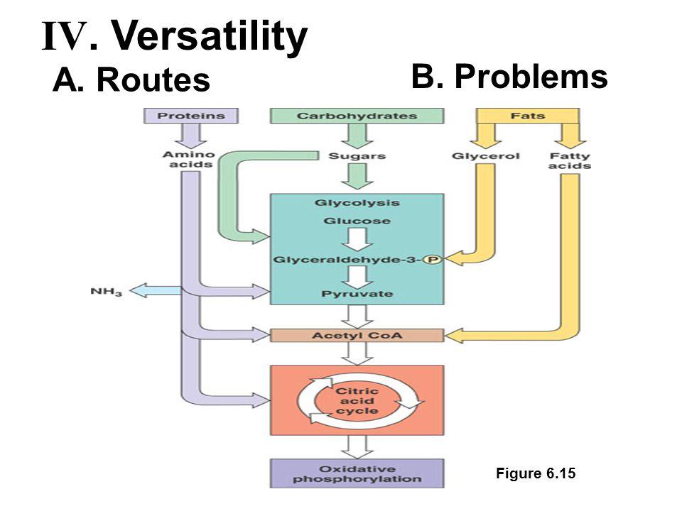 Figure 6.15 A. Routes B. Problems IV. Versatility