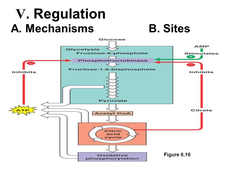 Figure 6.16 A. MechanismsB. Sites V. Regulation