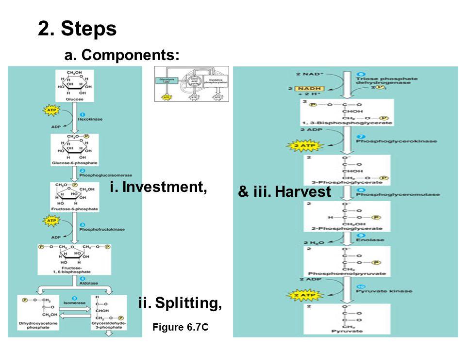 a. Components: Figure 6.7C 2. Steps ii. Splitting, i. Investment, & iii. Harvest