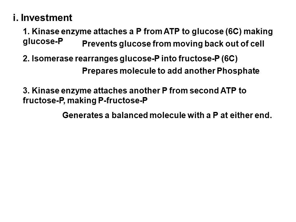 i. Investment 1. Kinase enzyme attaches a P from ATP to glucose (6C) making glucose-P Prevents glucose from moving back out of cell 3. Kinase enzyme a