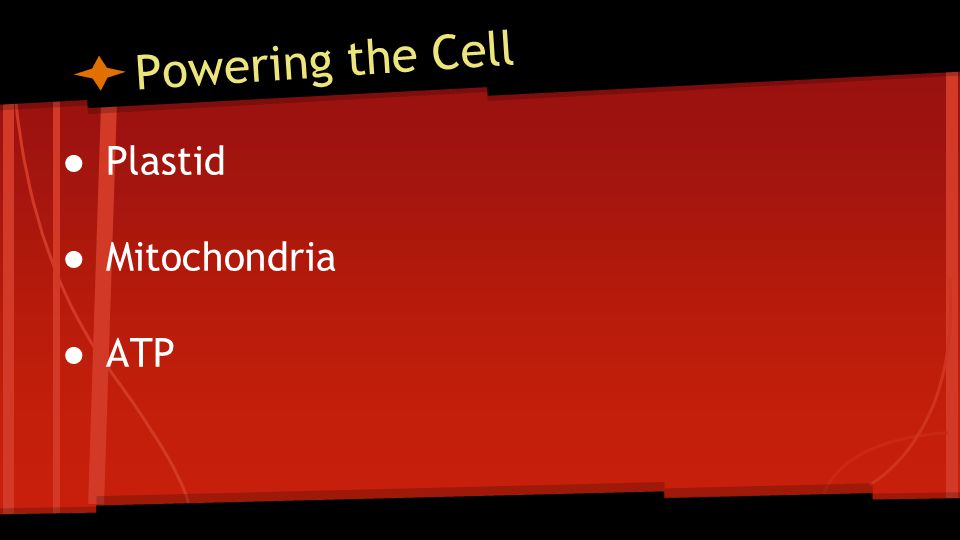 Powering the Cell ● Plastid ● Mitochondria ● ATP