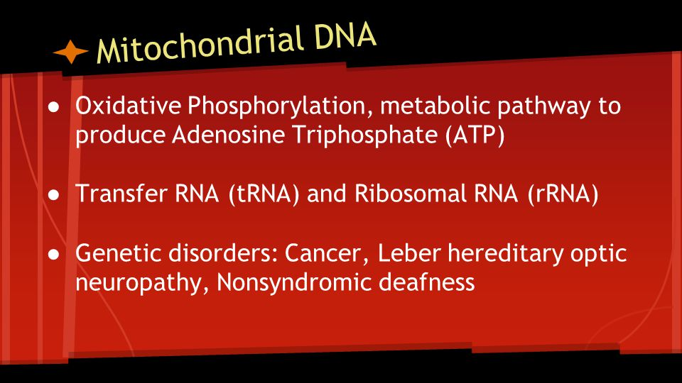 Mitochondrial DNA ● Oxidative Phosphorylation, metabolic pathway to produce Adenosine Triphosphate (ATP) ● Transfer RNA (tRNA) and Ribosomal RNA (rRNA) ● Genetic disorders: Cancer, Leber hereditary optic neuropathy, Nonsyndromic deafness