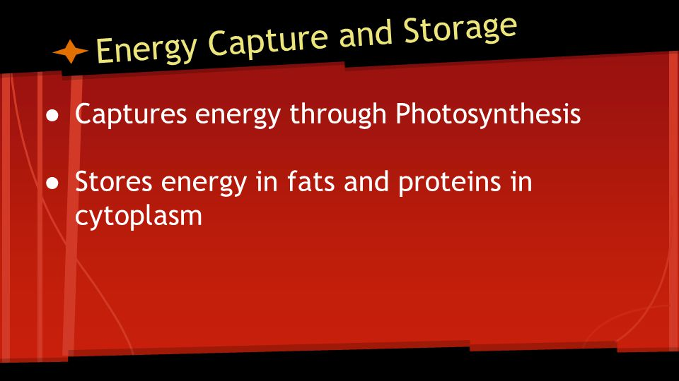 Energy Capture and Storage ● Captures energy through Photosynthesis ● Stores energy in fats and proteins in cytoplasm